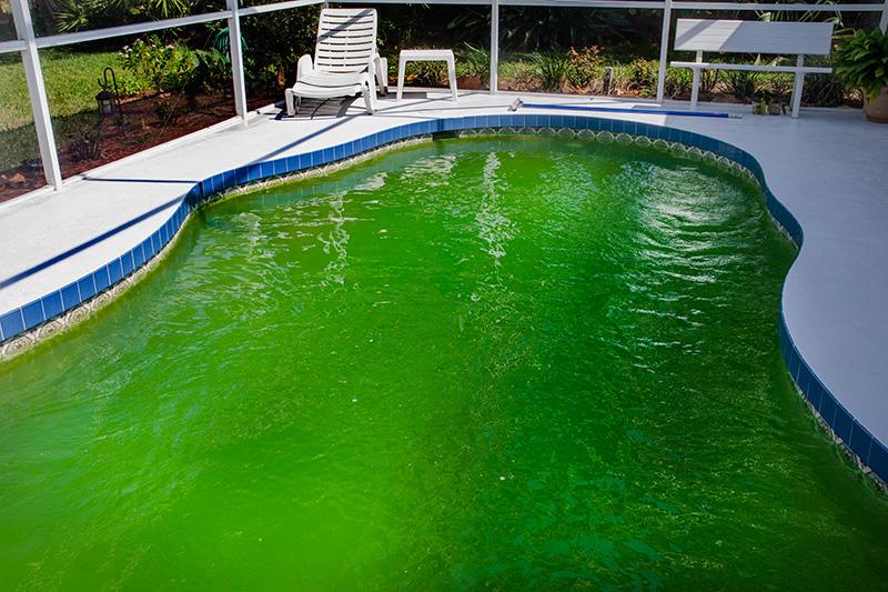 ¿Tienes un problema de algas en la piscina?